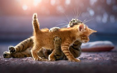 Download Wallpapers Fluffy Little Ginger Kitten Cute Cats Gray Cat Pets Friendship Concepts Besthqwallpapers Com Kittens Cutest Cute Cats Ginger Kitten