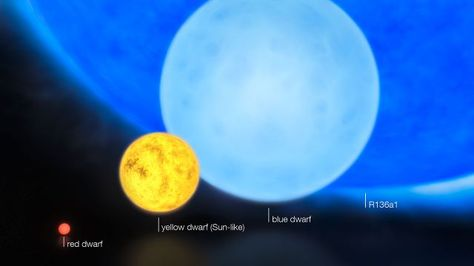 """Left to right: a red dwarf, the Sun, a blue dwarf, and R136a1. R136a1 is not the largest known star in terms of radius or volume, only in mass and luminosity. (Credit: ESO/M. Kornmesser) Mona Evans""""How Big Are the Biggest Stars"""" http://www.bellaonline.com/articles/art300366.asp"""