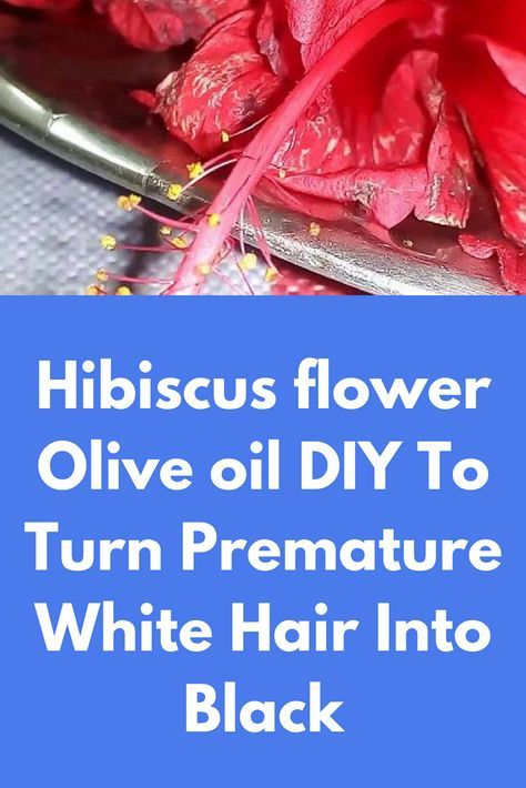 Hibiscus Flower Olive Oil Diy To Turn Premature White Hair Into Black For This Remedy You Will Need Hibiscus Flower Olive Hibiscus Coconut Hand Soap White Hair