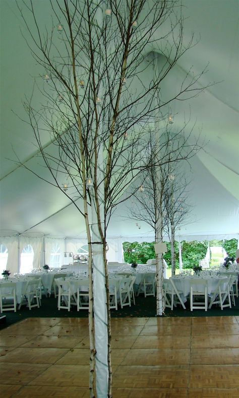 Tree tent pole.  I would fill the space on the poles with vines/greenery to hide the ties and make it more lush!