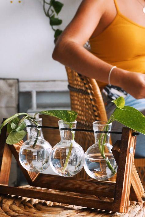 Plants! Vases!