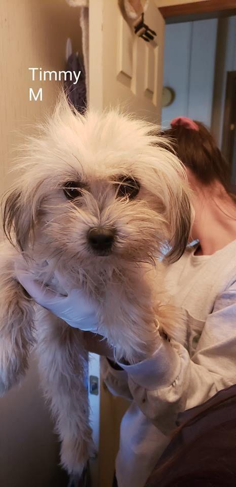 Dogs For Adoption Petfinder Dog Adoption Pet Adoption Help Homeless Pets