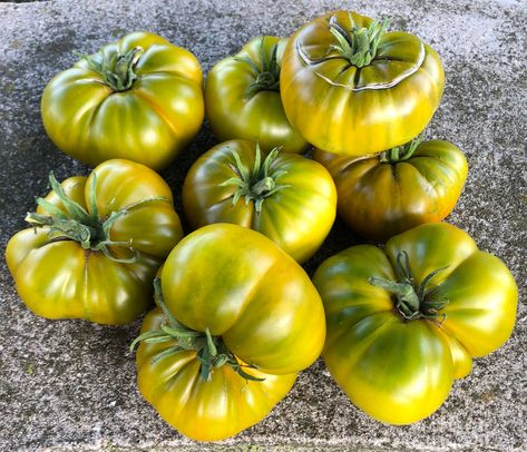 Tasty Evergreen Heirloom Tomato