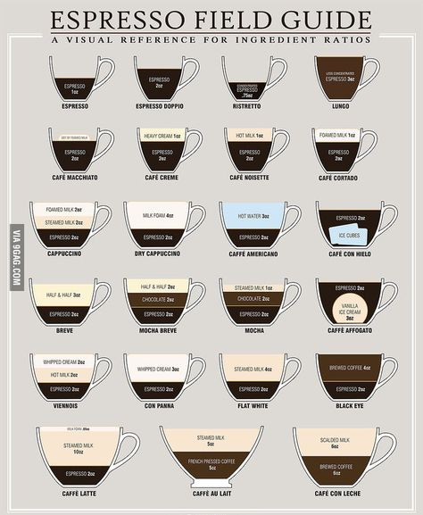 """What's The Difference Between a Latte, Cappuccino, and an Au Lait [infographic] """"This is a good graphic, that visually shows the difference between various espresso based drinks. I Love Coffee, My Coffee, Coffee Cups, Coffee Beans, Morning Coffee, Coffee List, Coffee Names, Coffee Study, Coffee Truck"""