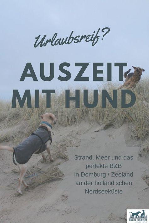 Geniessen Oder Auszeit Mit Hund An Der Hollandischen Nordseekuste Urlaub Mit Hund Hund Reisen Und Ferien Mit Hund