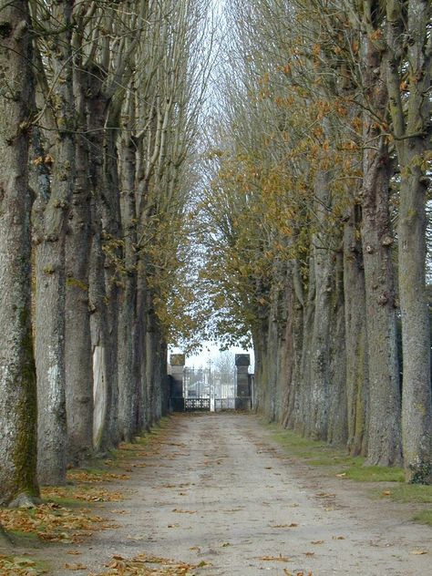 Allee in the Loire Valley | France