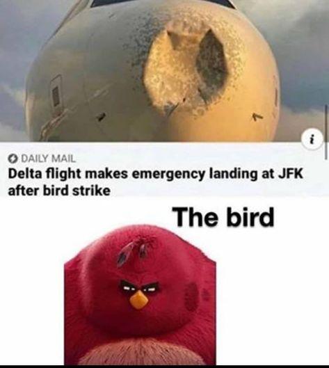 Crazy Funny Memes, Stupid Memes, Funny Relatable Memes, Wtf Funny, Funny Cute, Funny Posts, Hilarious, Memes Do Dia, New Memes