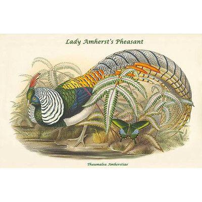 Buyenlarge Thaumalea Amherstiae Lady Amherst S Pheasant By John Gould Graphic Art Size 2 Bird Prints Pheasant Bird Artwork