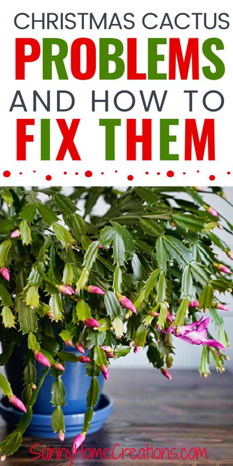 Garden Shrubs, Lawn And Garden, Garden Plants, House Plants, Porch Plants, Indoor Cactus Plants, Potted Plants, Christmas Cactus Plant, Christmas Flowers