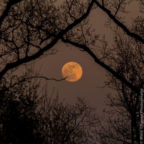 Early Evening Full Moon Early Evening Full Moon by Mark Chance Night Aesthetic, Autumn Aesthetic, Aesthetic Photo, Aesthetic Pictures, Arte Obscura, Dark Paradise, Beautiful Moon, Full Moon, Moon Moon