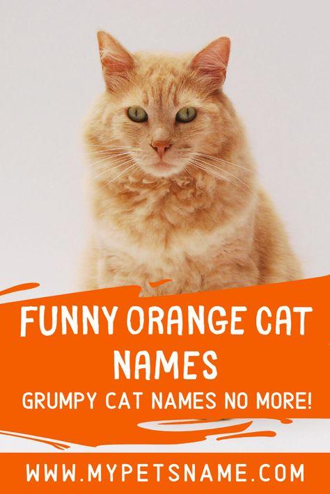 Funny Orange Cat Names Funny Orange Funny Cat Names Cat Names