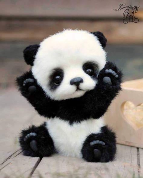 Hugo by Lastenka #cuteanimals El panda mas bonito del mundo quiero uno.