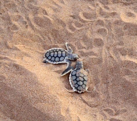 Kissing-turtles-compress