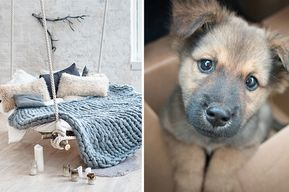Here S A Puppy You Should Adopt Based On Your Dream Home Dog