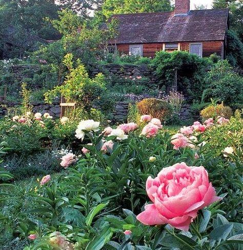 Le Jardin De Tasha Tudor Projets De Jardins Jardin Anglais