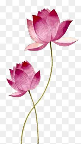 Pink Lotus Lotus Clipart Pink Lotus Png Transparent Clipart Image And Psd File For Free Download Lotus Flower Painting Lotus Flower Painting Watercolors Lotus Flower Art