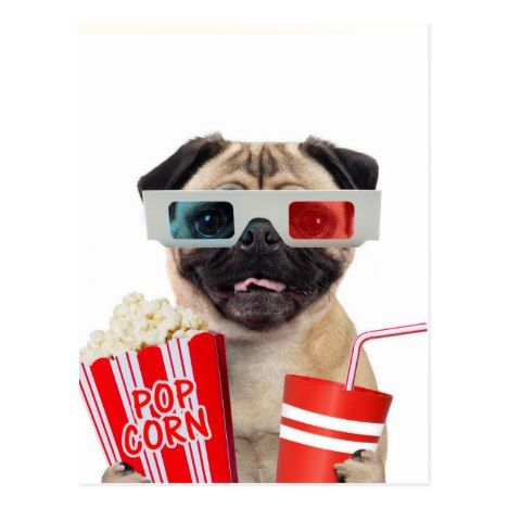 Pug Watching A Movie Postcard Zazzle Com With Images Pug