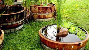 Weinfasser Als Mini Teich Miniteich Bepflanzung Pflanzen