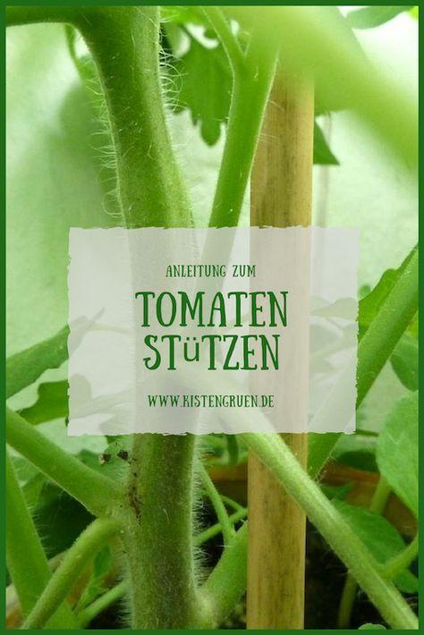 Tomaten Stutzen Und Festbinden Tomaten Pflanzen Tomaten Garten Tomaten Pflanzen Balkon