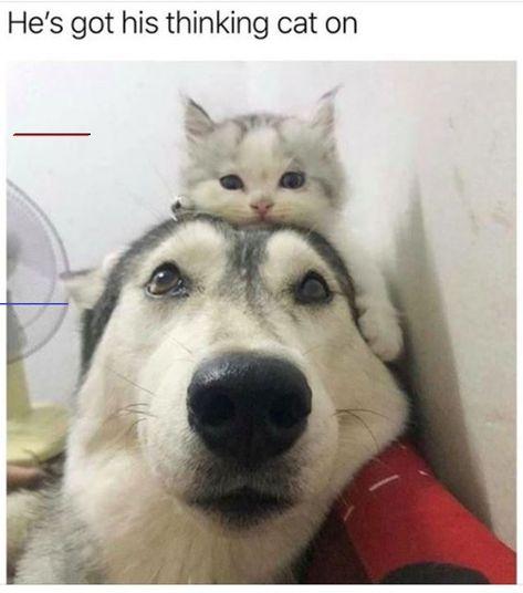 #cats #catsofinstagram #cat #of #catstagram #instagram #catlover #instacat #catlovers #pets #kittens #meow #kitten #kitty #catoftheday #dogs #world #cute #love #animals #pet #catlife #gatos #adoptdontshop #gato #instacats #cutecats #lovecats #catsagram #bhfyp<br>