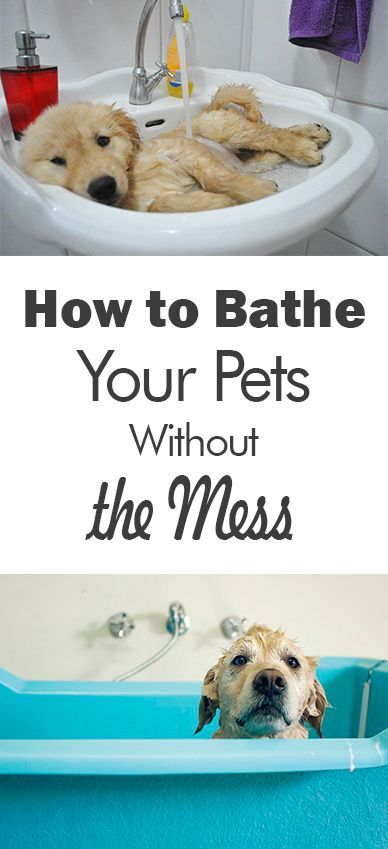 How To Bathe Your Pets Without The Mess Puppy Training Easy Pets Pets