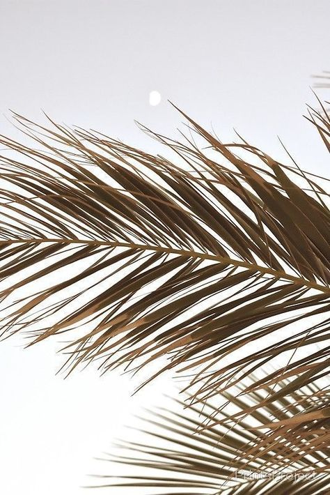 Palm Tree Leaves in BeigeYou can find Palm trees and more on our website.Palm Tree Leaves in Beige Cream Aesthetic, Brown Aesthetic, Beach Aesthetic, Summer Aesthetic, Aesthetic Photo, Aesthetic Pictures, Artist Aesthetic, Simple Aesthetic, Aesthetic Collage