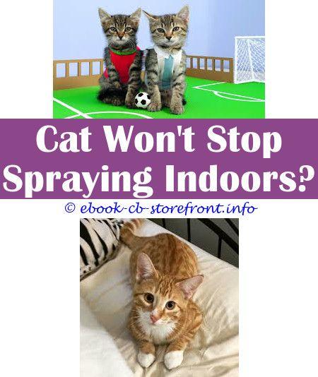 57e87594ff571086f935c867f98cb261 - How To Get Rid Of Cat Spray Smell Under House