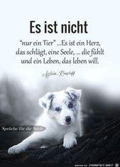 (notitle) - Goodbye My Best Friend. | TROSTLICHT für Haustiere -
