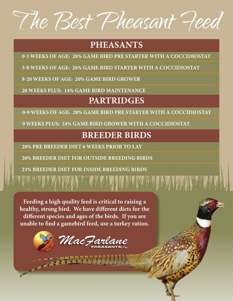 Want tips on what type of feed your birds need?   Read more information here https://www.pheasant.com/portals/0/documents/MacFarlane_PheasantFeed.pdf