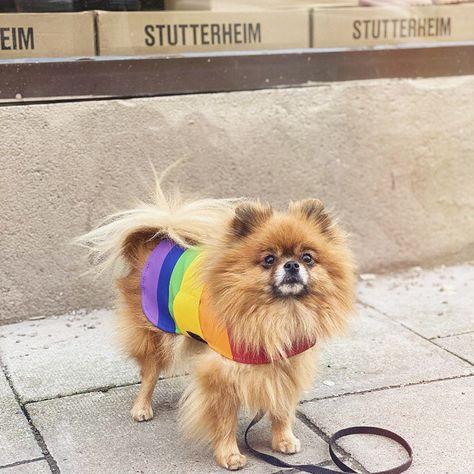 1013 Best #stutterheim images in 2020 | Stutterheim