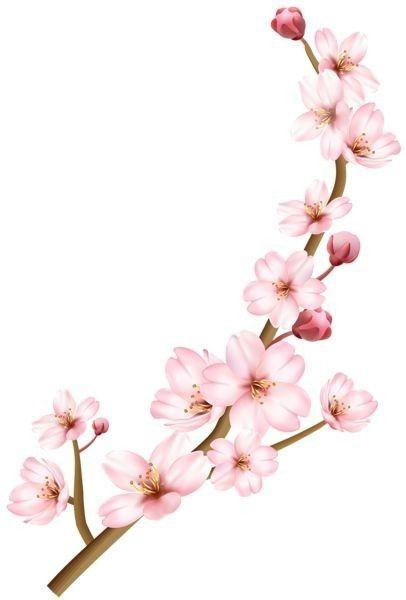 Pin By Ana Cristina Pimenta On Desenhos E Pinturas Cherry Blossom Clip Art Cherry Blossom Painting Blossoms Art