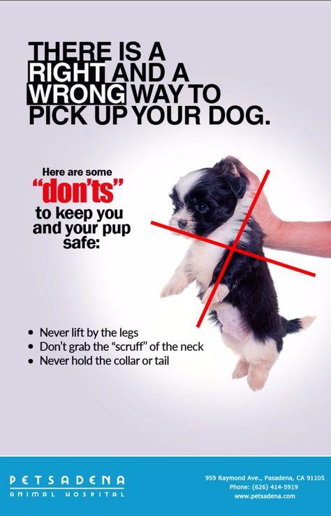 Grabbing Dog By Scruff : grabbing, scruff, Petsadena, Animal, Hospital, Ideas, Hospital,, Veterinary, Services,, Pasadena
