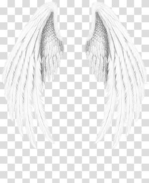 Angel Wing Angel Wings Transparent Background Png Clipart Angel Wings Art Angel Wings Png Angel Wings Background
