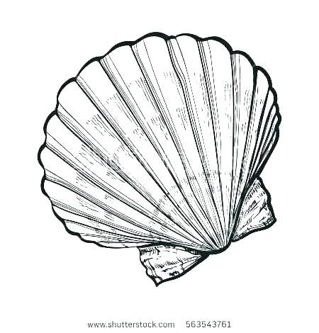Free Printable Seashell Coloring Pages Seashell Coloring Pages Printable Sea Shell Coloring Page Seashell Pictures Shell Drawing Shell Tattoos Seashell Tattoos