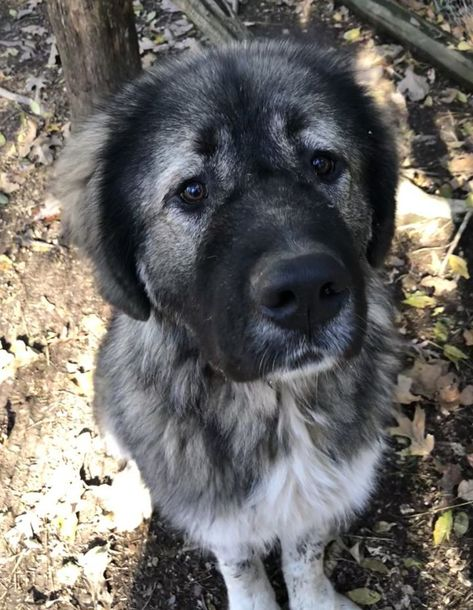 Adopt Arkansas Little Rock Aslan On Petfinder In 2020 Dog Adoption Save A Dog Help Homeless Pets