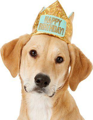 Frisco Happy Birthday Dog Crown Happy Birthday Dog Dog First