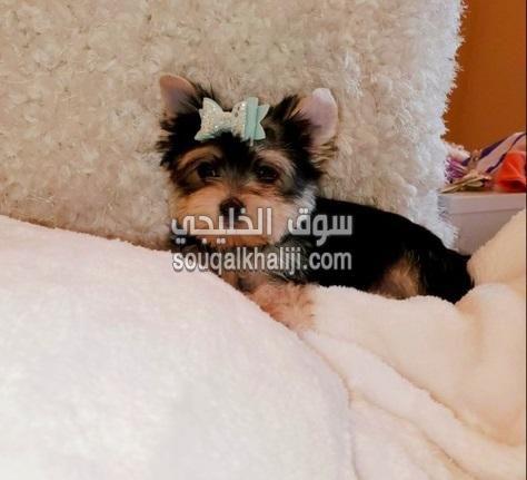 Dubai In 2020 Animals Dubai Dogs
