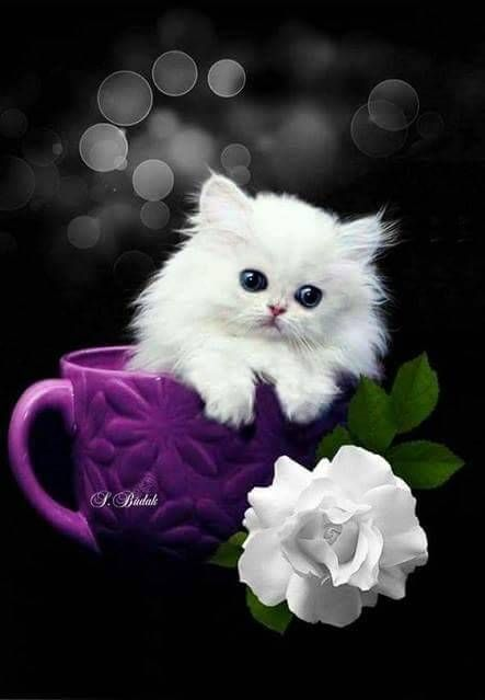 Moments Cute Funny Dogs Cute Baby Animals Cute Cats Beautiful wallpaper cats pictures