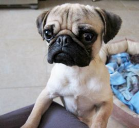 Adopt Mason On Puppy Finder Dogs Rescue Dogs