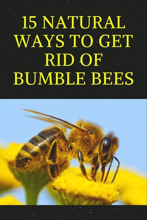 5853d30ea135b406db51d3d1420d9b0d - How To Get Rid Of Bees Flying Around You