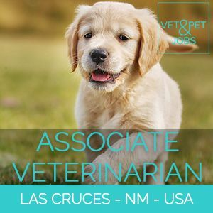 Associate Veterinarian Small Animal Las Cruces New Mexico Usa Explore This Opportunity With A Practice The Has A Passion F Vet Jobs Pet Vet Veterinary Services