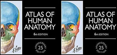 NETTER'S ATLAS OF HUMAN ANATOMY, PDF for FREE Download, undoubtedly
