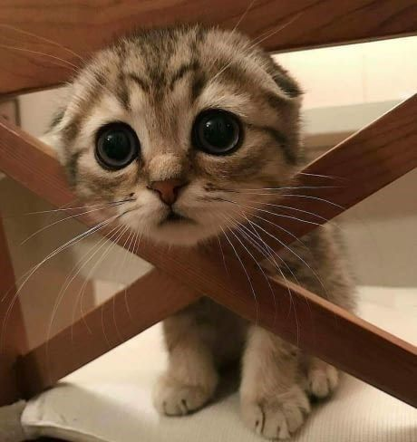 20 Adorable Animals That Will Make Your Day Brighter - I Can Has Cheezburger?