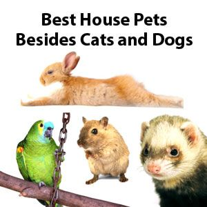 Best House Pets Besides Cats And Dogs Best Small Pets Small House Pets Apartment Pet