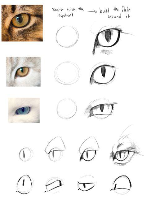 how to draw a cat image Cat Anatomy, Anatomy Drawing, Animal Anatomy, Cat Drawing Tutorial, Drawing Tips, Pencil Art Drawings, Art Drawings Sketches, Animal Sketches, Animal Drawings