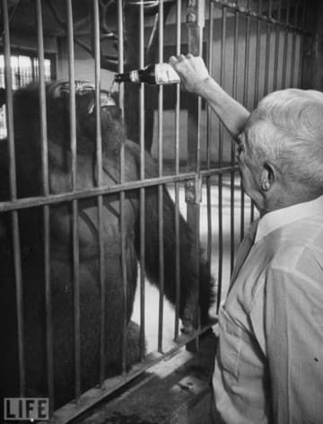 40 Pictures That Show Just How Much The World Has Changed St Louis Zoo Pictures What Is Life About