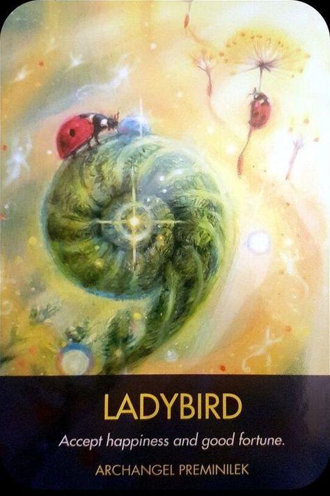 Angel Guidance, Spiritual Guidance, Animal Spirit Guides, Spirit Animal, Angel Prayers, Oracle Tarot, Angel Cards, Spiritual Inspiration, Deck Of Cards