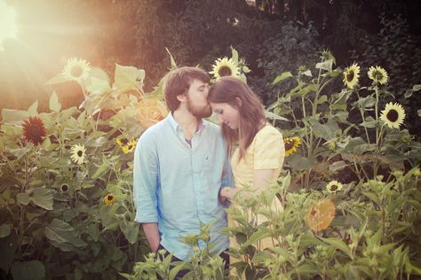MSU Horticulture Gardens. Sunset, sunflowers, sun flare. MSU Engagement Session, East Lansing. Photos by Tammy Sue Allen Photography.
