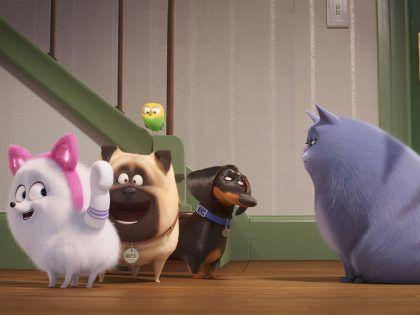 映画 ペット2 の最新映像が到着 ポメラニアンのギジェットが 猫 になるべく大奮闘 Petomorrow ペットゥモロー 明日も うちの子 元気 ギジェット ペット 動物福祉
