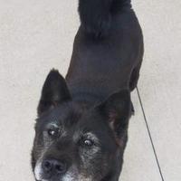 Pet Card Mixed Breed Puppies Dog Adoption Pets